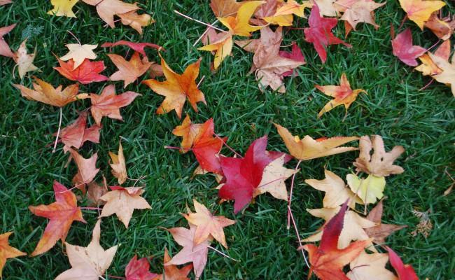 07_Giardino privato_ foglie sul prato